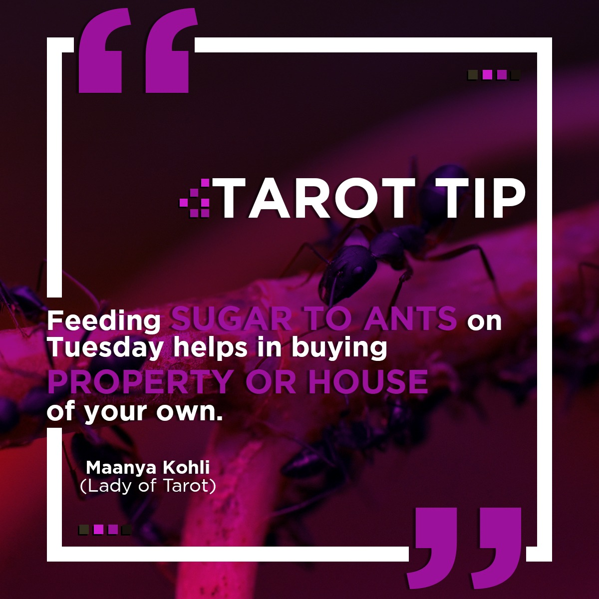 Tarot tip to buy your own home or property.