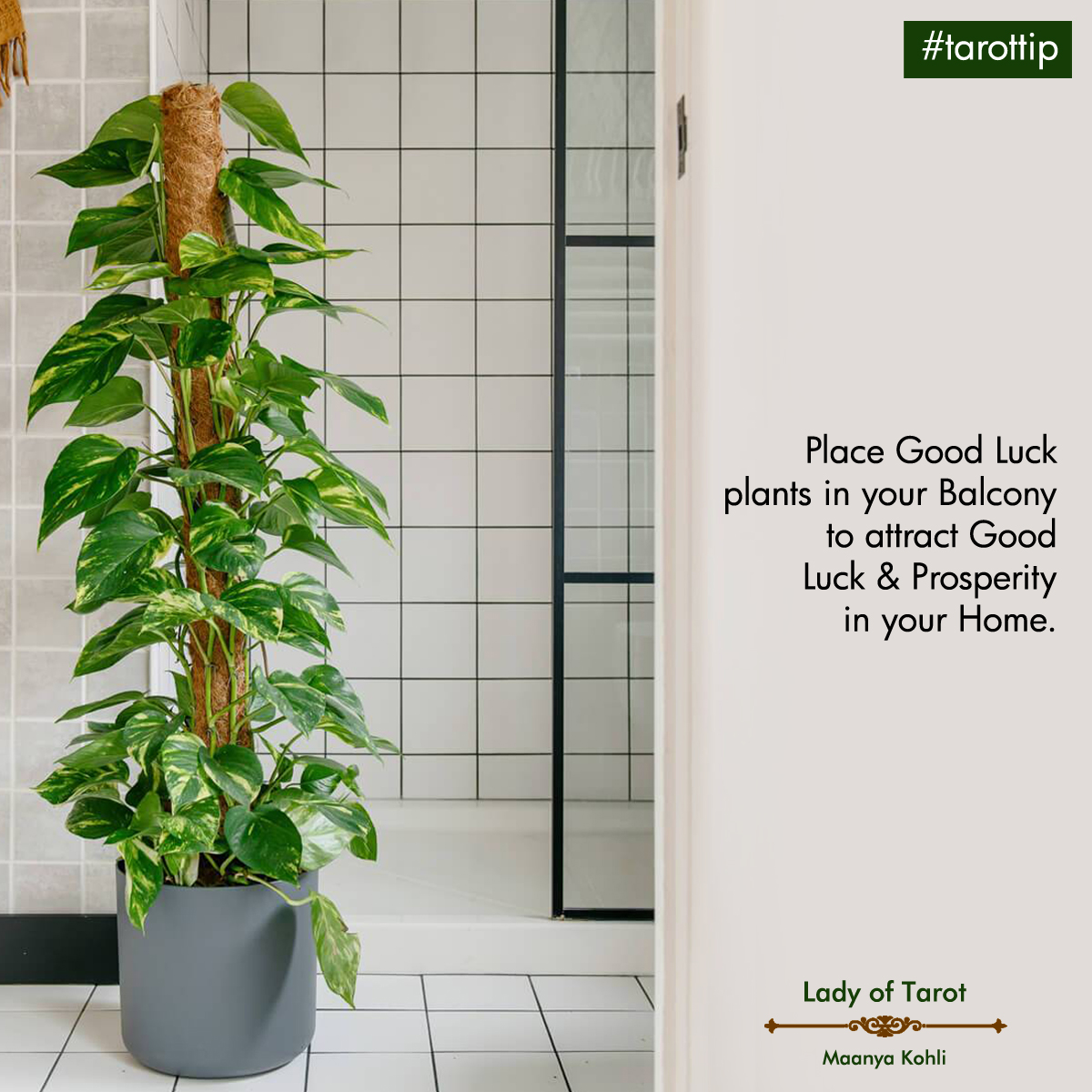 Tarot Tip for luck and prosperity: place good luck plants in your balcony to attract luck and prosperity in your home