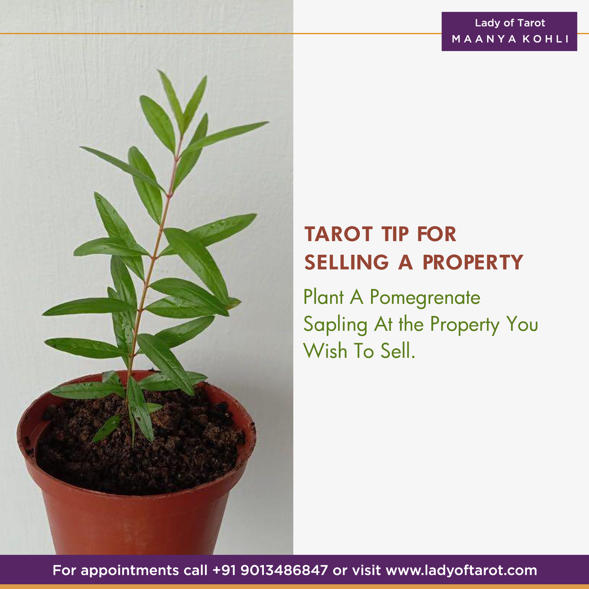 Tarot Tip for Selling Property